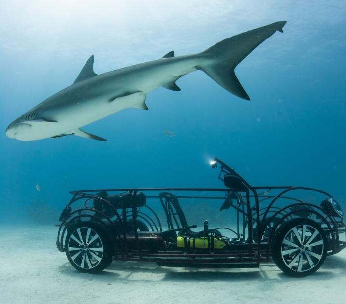 Volkswagen unveils Beetle Convertible shark cage