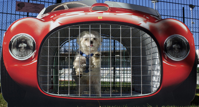 Ferrari lifts ban for dogs at the museum in Italy